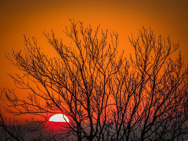 Tree Silhouetted By Irish Sunrise Poster