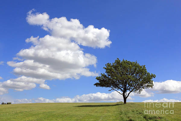 Tree With Clouds Poster