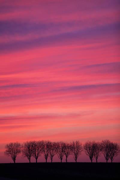 Treeline At Sunset Poster
