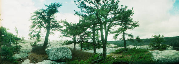 Trees And Boulders Along The Gertrudes Poster
