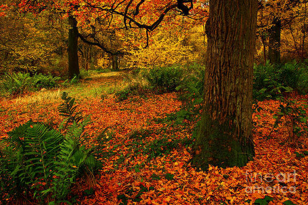 Trees In Autumn Woodland Poster