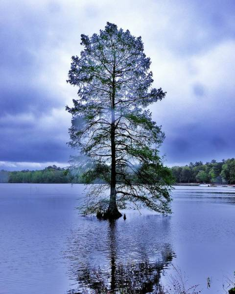 The Healing Tree - Trap Pond State Park Delaware Poster