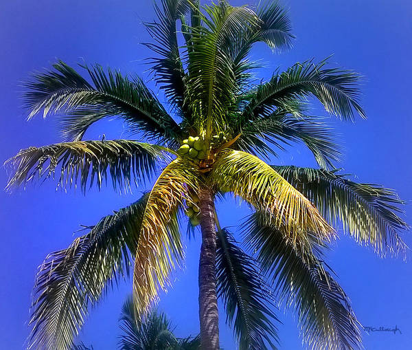 Tropical Palm Trees 8 Poster