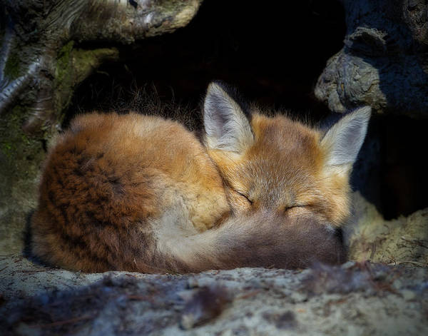 Fox Kit - Trust Poster