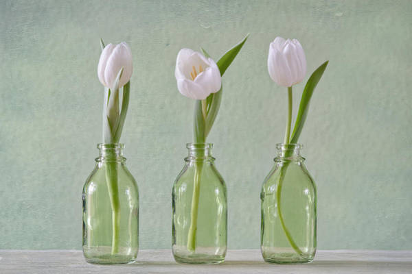 Tulips In A Bottle Poster
