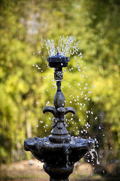 Twin Oaks Garden Fountain Poster