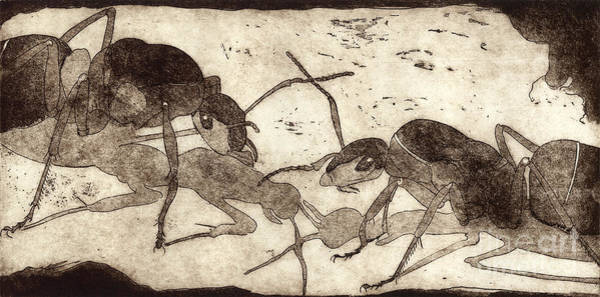 Two Ants In Communication - Etching Poster