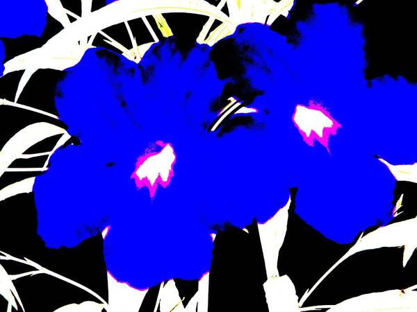 Two Blue Jack Flowers Poster