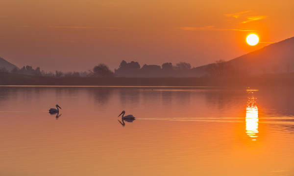 Two Pelicans At Sunrise Poster