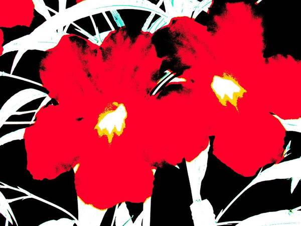 Two Red Jack Flowers Poster