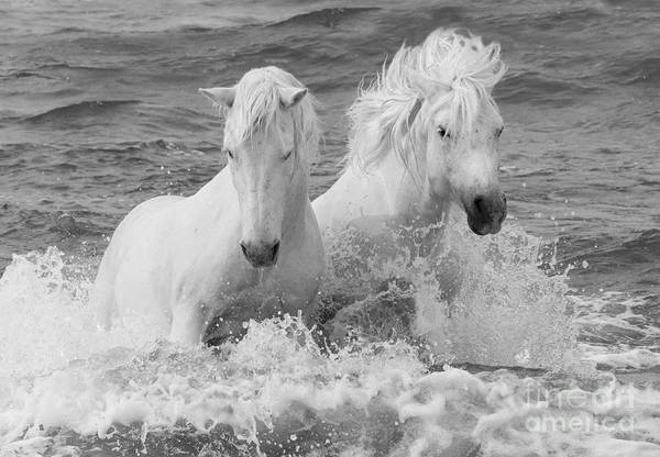 Two White Horses In The Waves Poster