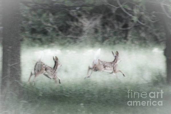 Two Whitetail Fawns Running Poster