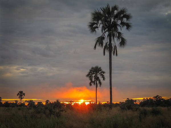 Typical African Sunset Poster