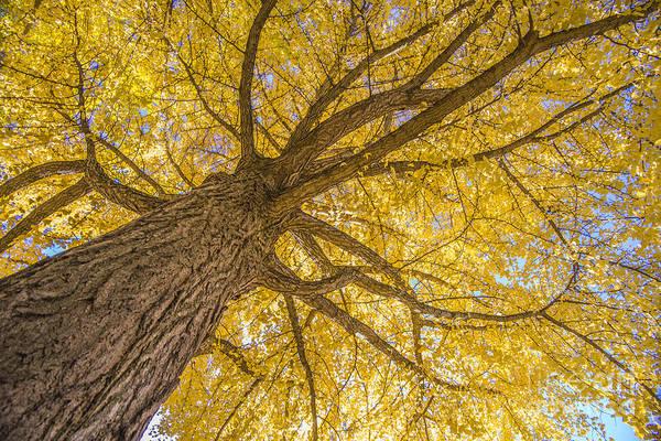 Under The Autumn Tree Poster