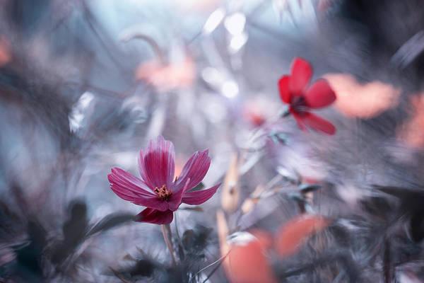 Une Autre Fleur, Une Autre Histoire Poster