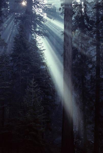 Usa, California, Sun, Smoke, Forest Poster