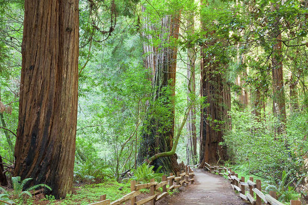 Usa, California Trail Through Muir Poster