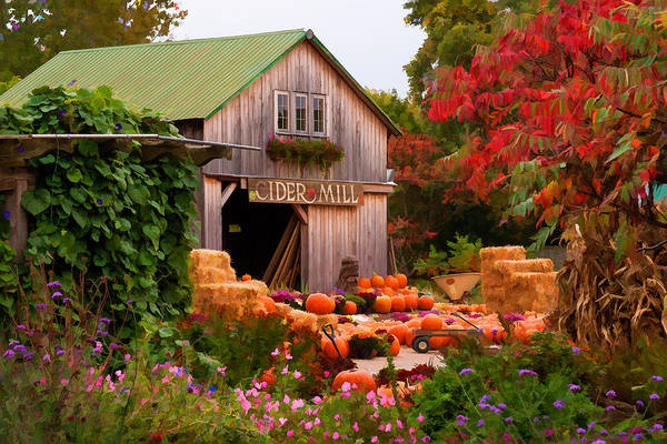 Vermont Pumpkins And Autumn Flowers Poster