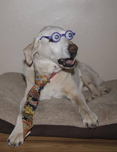 Very Intelligent Dog Poster