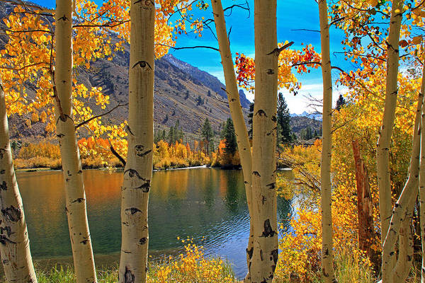 View Through The Aspens Poster