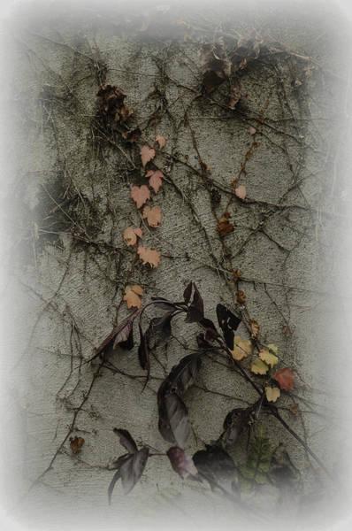 Vignes D'automne Poster