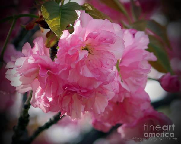 Vignette Cherry Blossom Poster