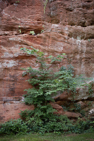Vines And Canyon Walls Poster