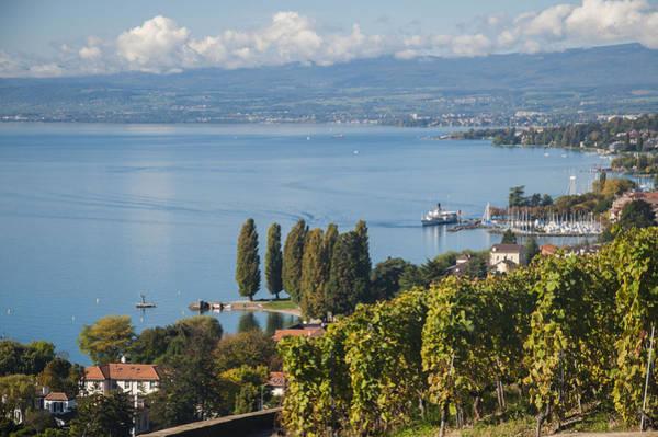 Vines Over Lake Geneva Poster