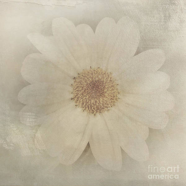 Vintage Painterly White Daisy  Poster