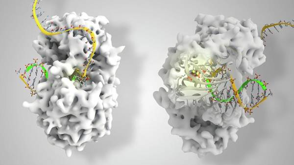 Viral Dna Polymerase In Complex With Dna Poster