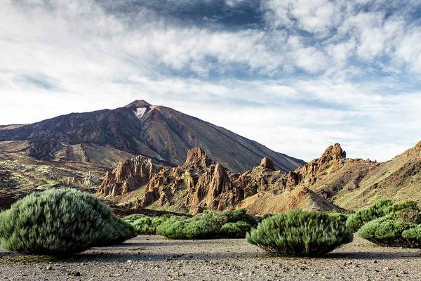 Volcano Teide, With Cloudy Sky And Pine Poster