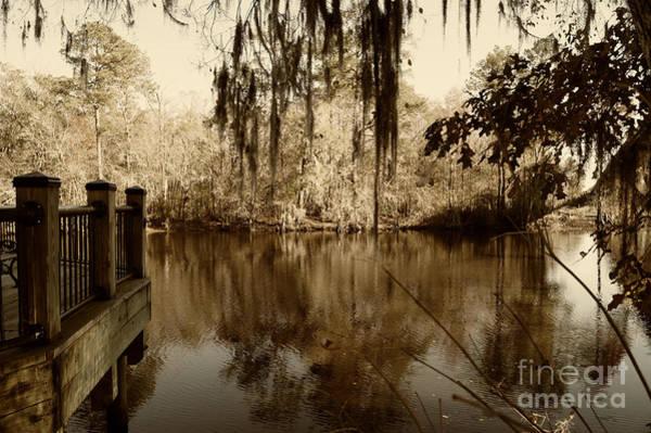 Waccamaw River In Autumn Sepia Poster