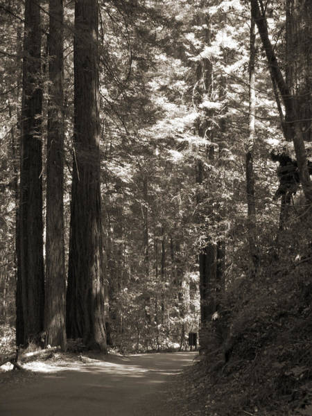Walking In The Redwoods 2 Poster