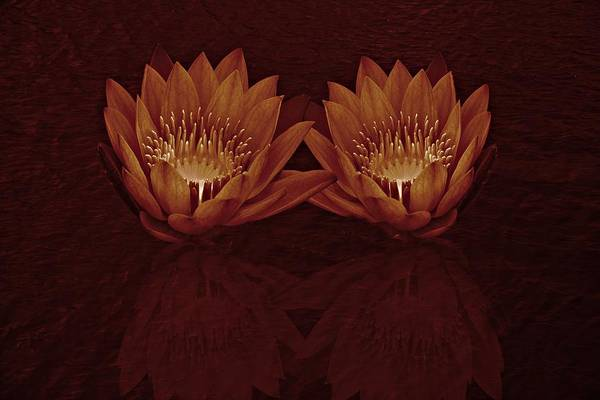 Water Lilies In Deep Sepia Poster