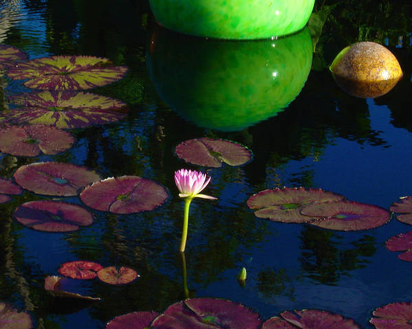 Waterlily Reflection Poster