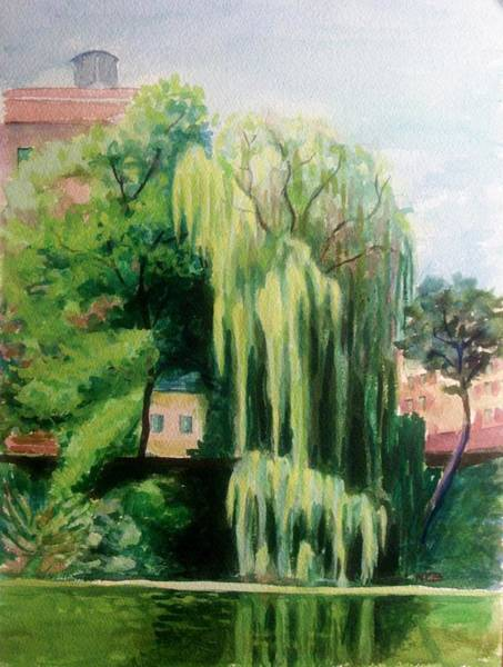 Weeping Willow At North Pond Poster