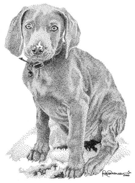 Poster featuring the drawing Weimaraner by Rob Christensen