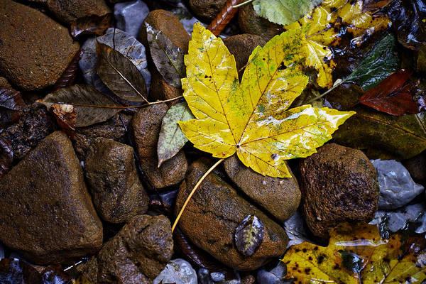 Wet Autumn Leaf On Stones Poster