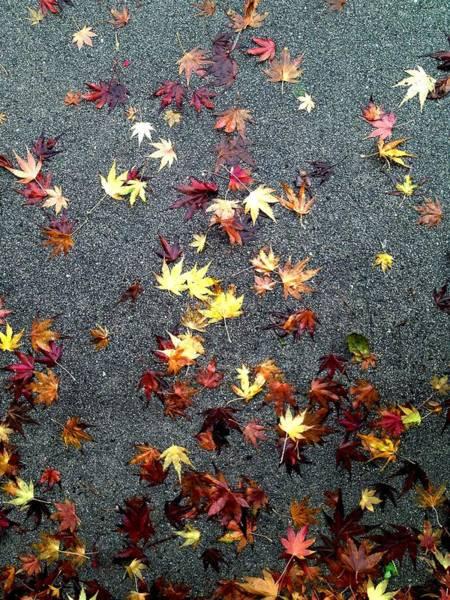 Wet Autumn Poster