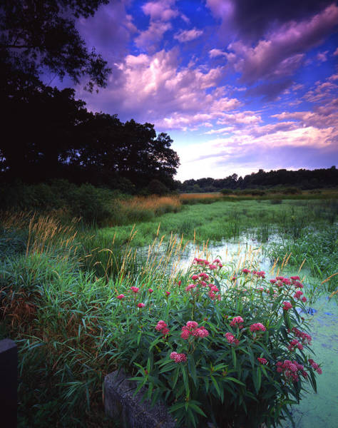 Wetland Wonder Poster