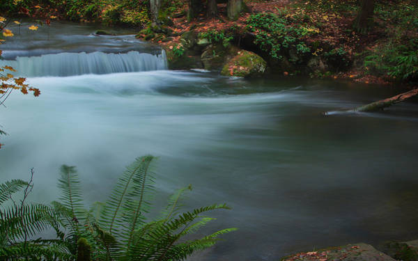 Poster featuring the photograph Whatcom Falls Park by Jacqui Boonstra