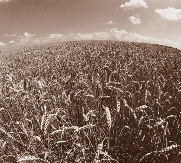 Wheat Fields Forever Poster