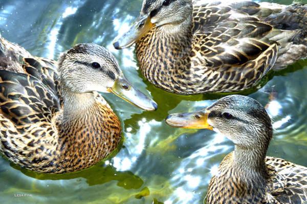 When Duck Bills Meet Poster