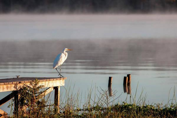White Egret In Foggy Morning Light Poster