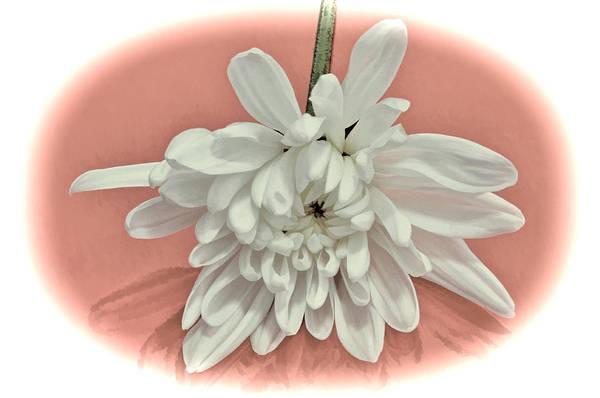 White Flower On Pale Coral Vignette Poster