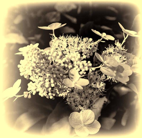 white flower SV Poster