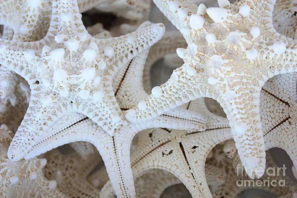 White Starfish Poster
