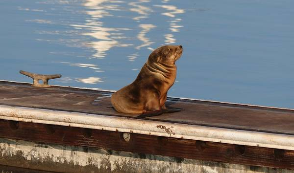 Wild Pup Sun Bathing Poster
