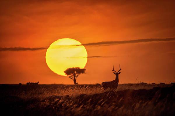 Wild Sunrise Poster