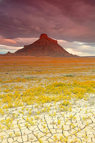 Wildflowers At Factory Butte. Poster